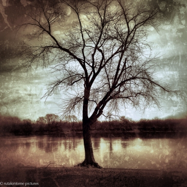 riverside tree