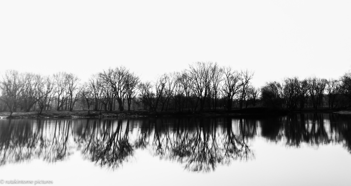 tree-flections
