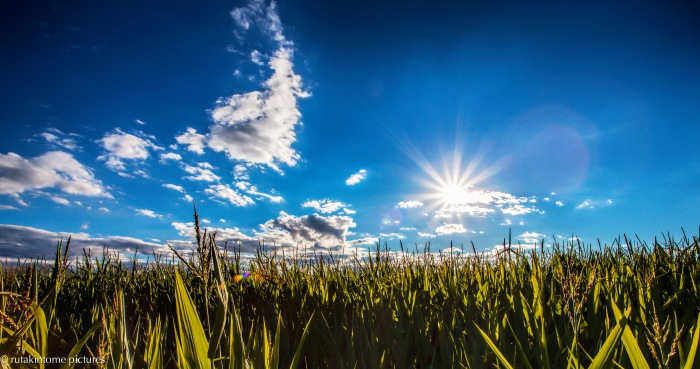 corn and light