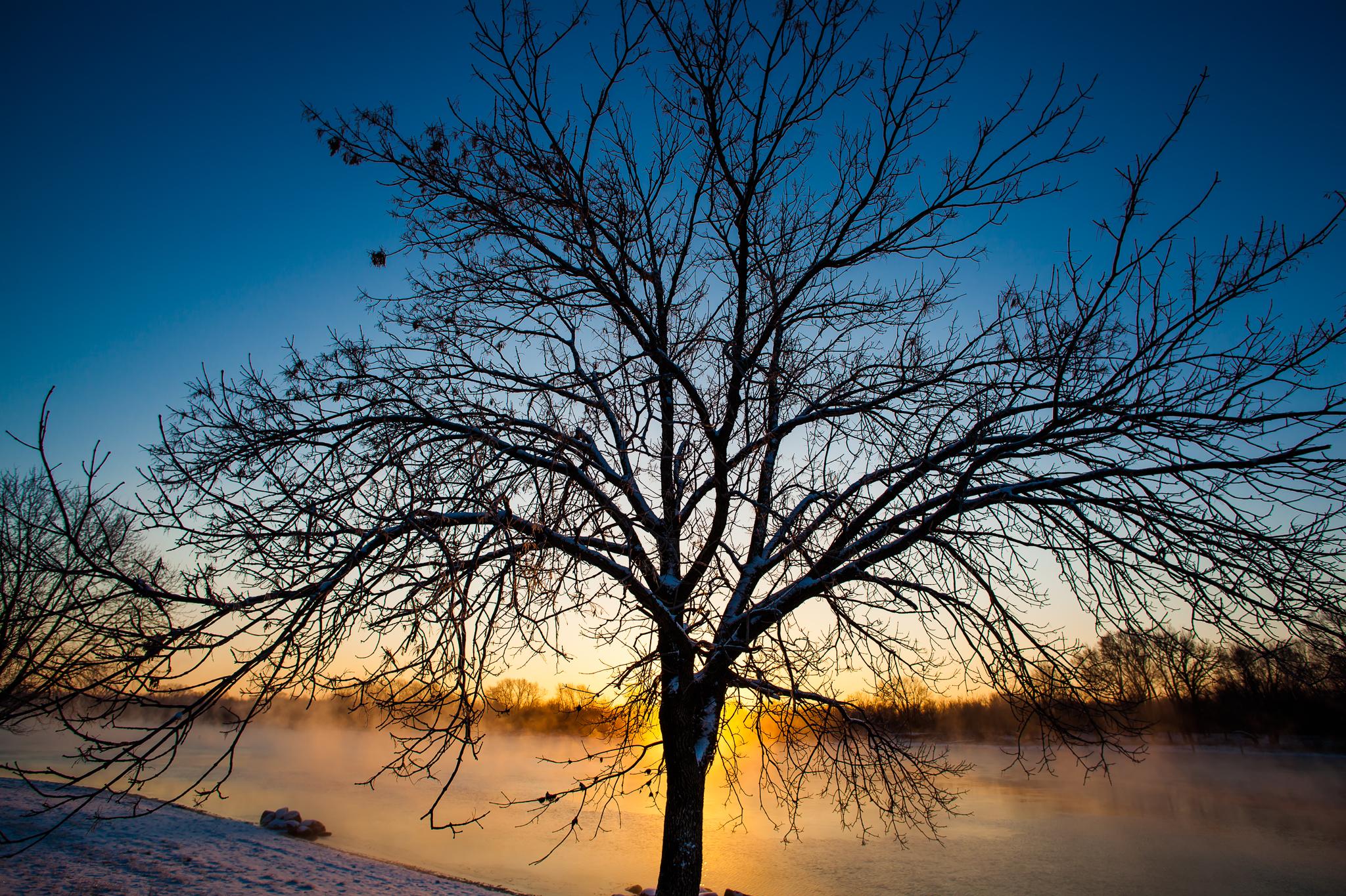 winter's tree